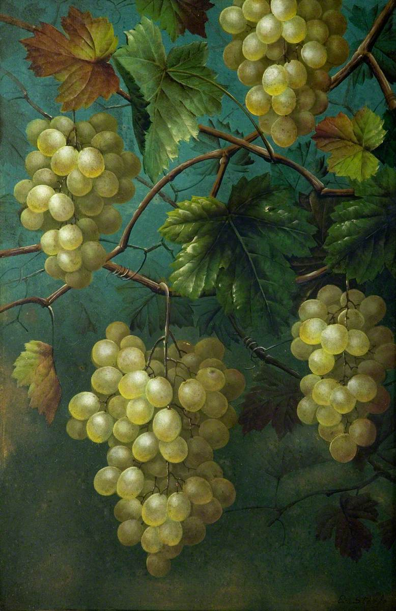 Still Life of Grapes and Vine