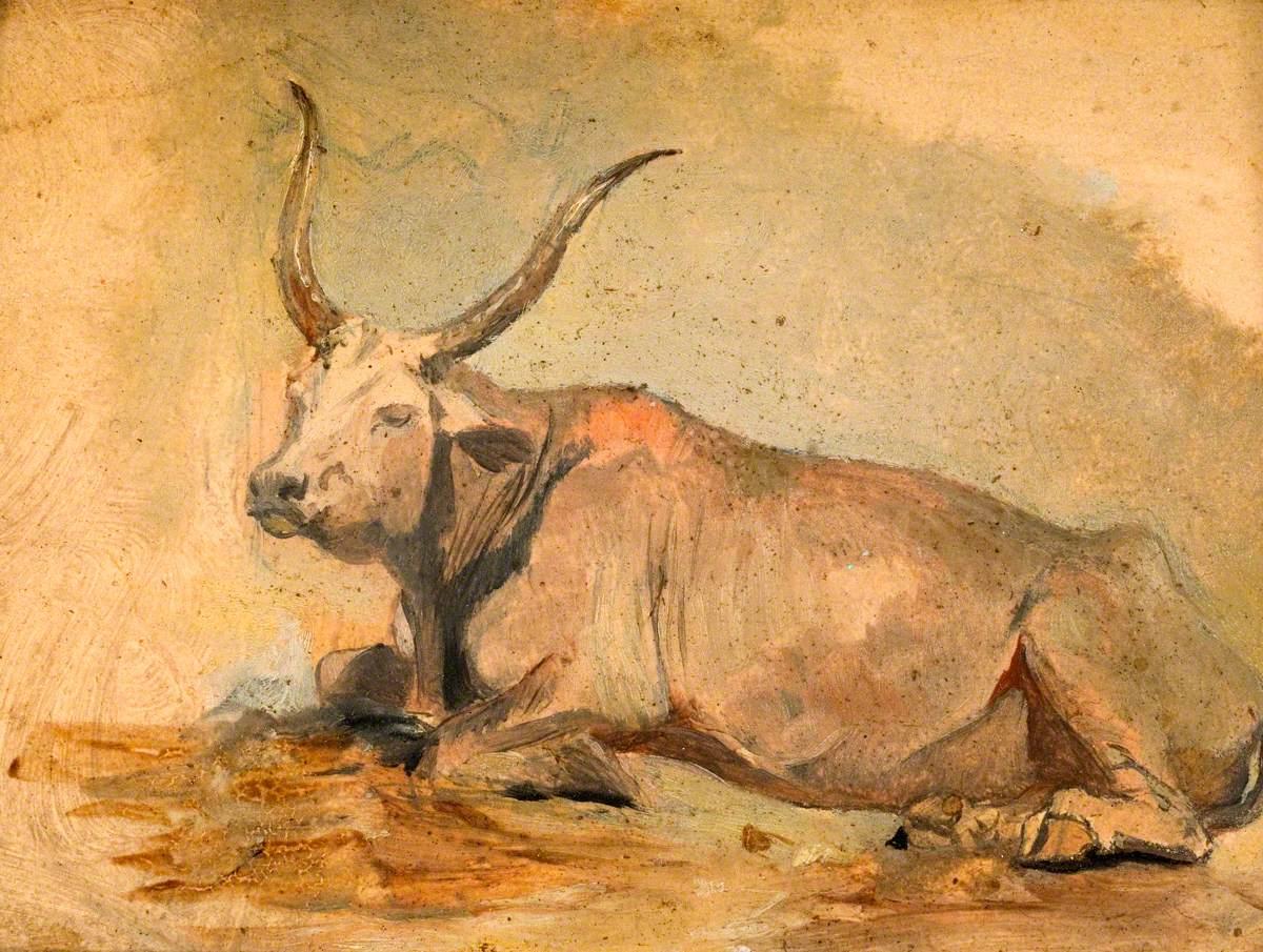 Roman Ox (Lying down)