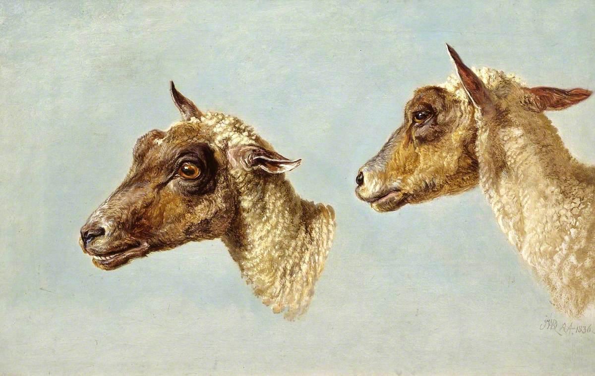 Study of Sheeps' Heads
