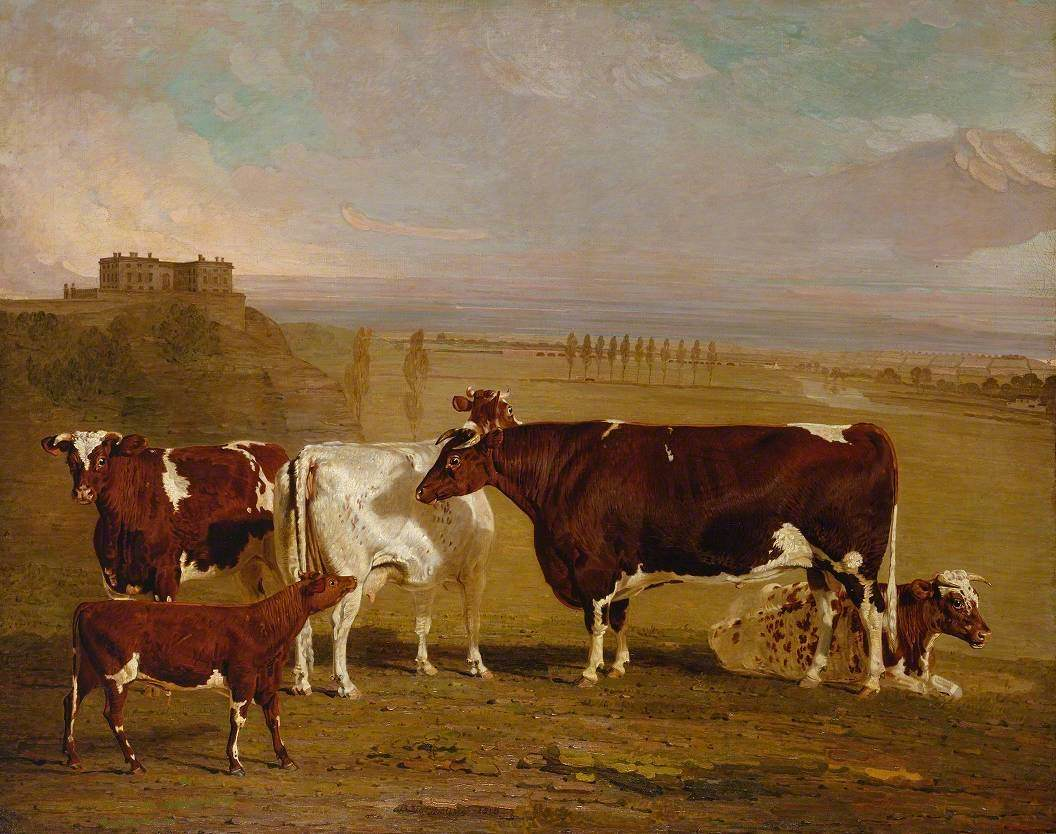 Portraits of Cattle of the Improved Short-Horned Breed, the Property of J. Wilkinson Esq. of Lenton, near Nottingham