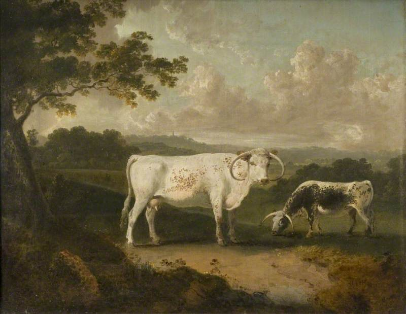 Kenwood, Lord Mansfield's Pedigree Cattle