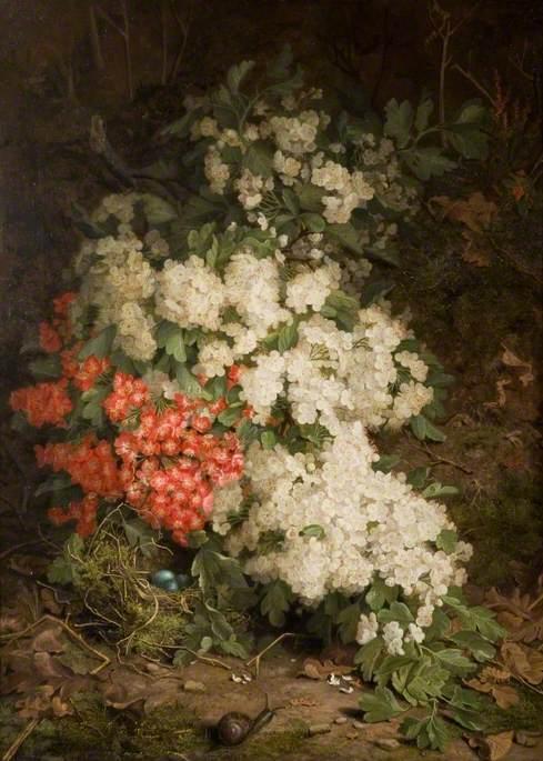 Fragrant Hawthorn