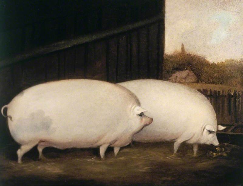 A Pair of Pigs
