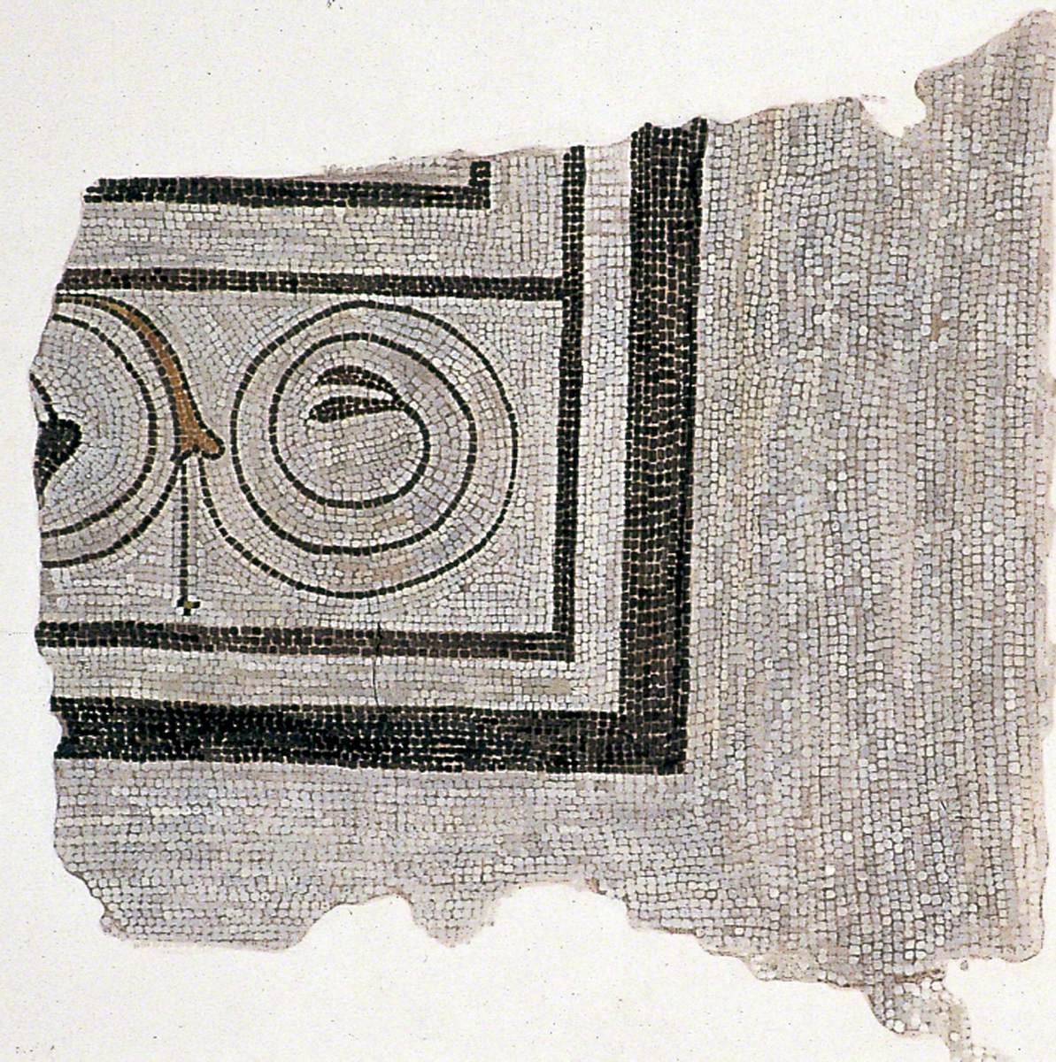 Spiral Vine Tendril Border on Late First Century Mosaic