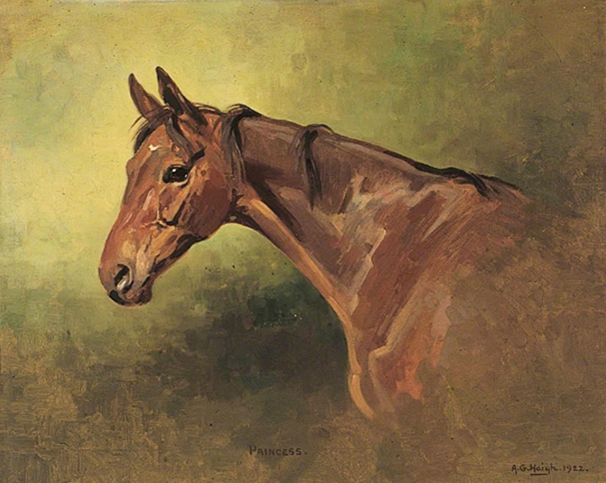 Horse Portrait, 'Princess'