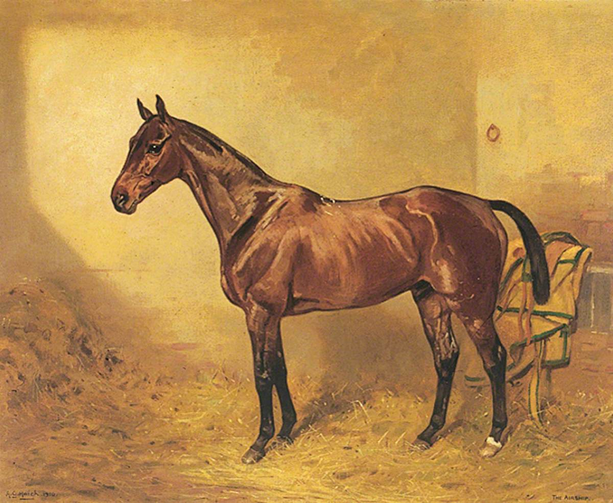 Horse Portrait, 'The Airship'