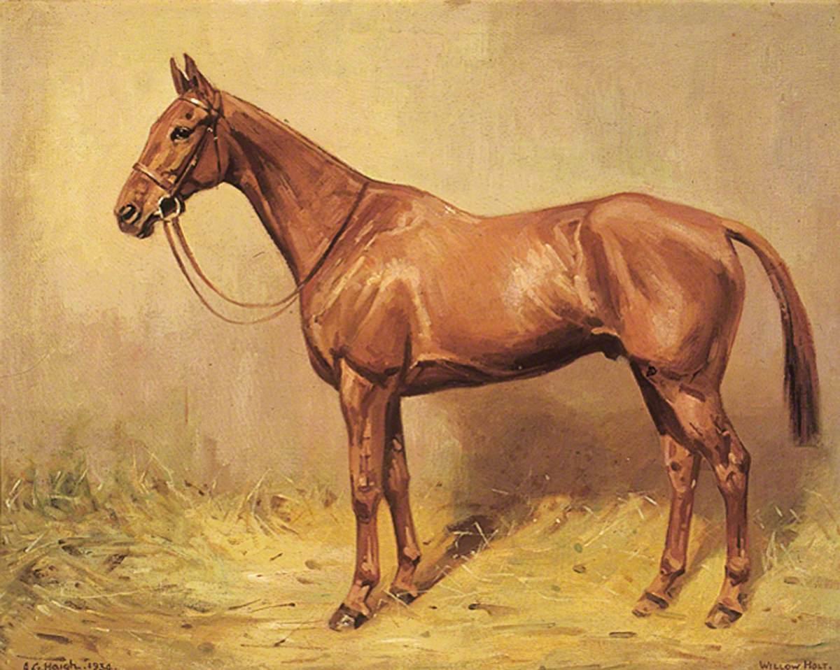 Horse Portrait, 'Willow Holt'