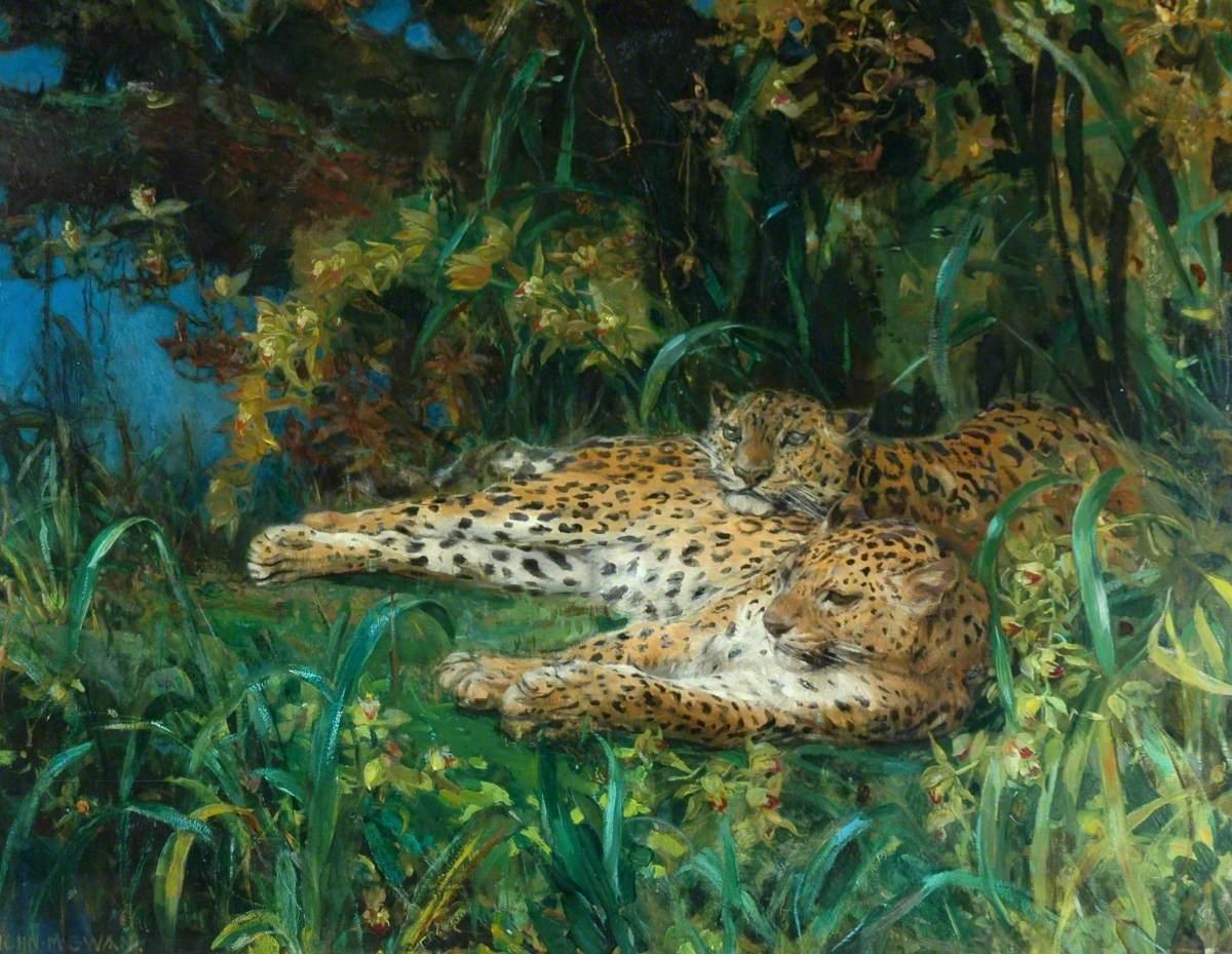 Indian Leopards
