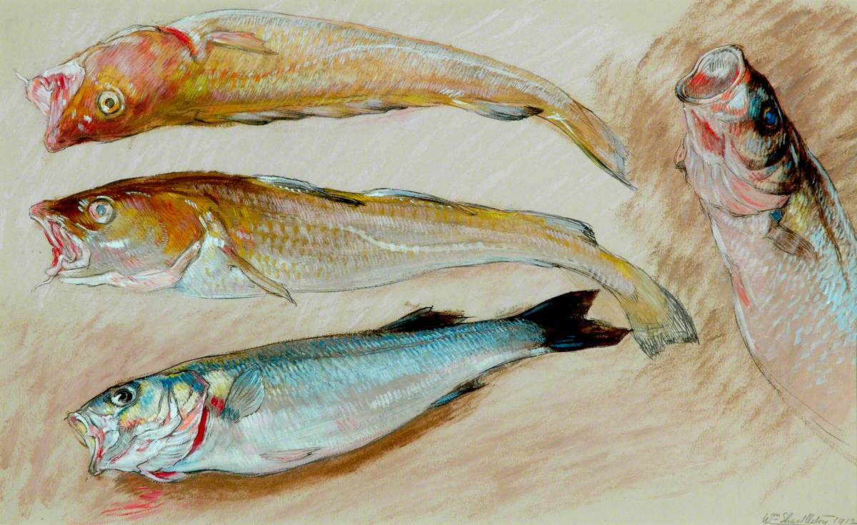 Study of Four Fish for 'The Mackerel Nets'