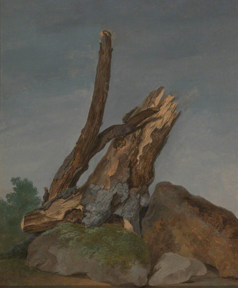 Study of Rocks and Branches