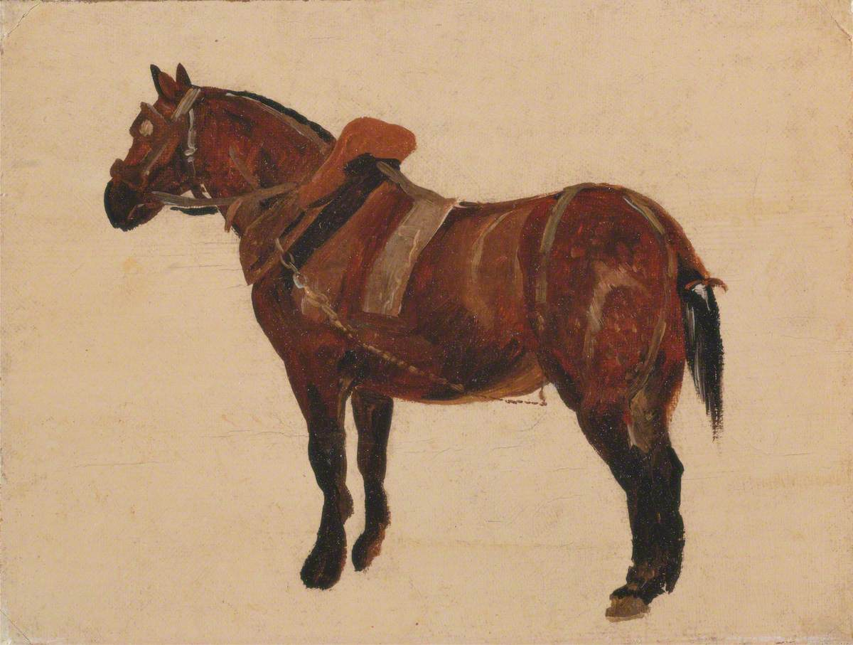 Study of a Working Horse