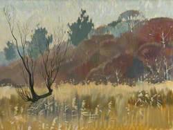 Tournebury Woods