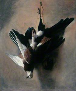 A Pigeon and a Magpie