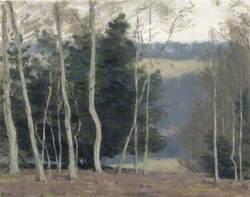 Trees near Whiteleaf Cross, Buckinghamshire