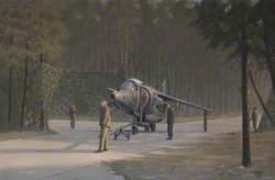 Ready to Hide (Harrier)