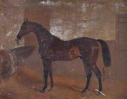Bay 'Middleton', Winner of the Epsom Derby, 1836