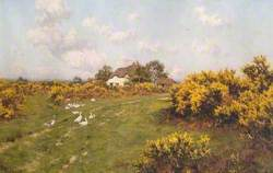 Gorse on a Berkshire Common