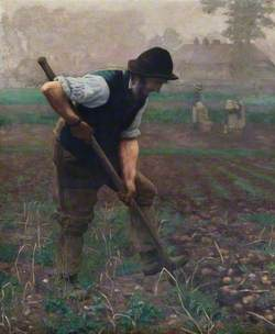 A Man Digging Potatoes