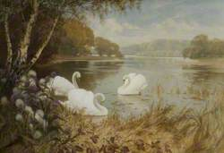 Landscape, Lake with Swans