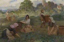 Agricultural Workers Gathering Woad