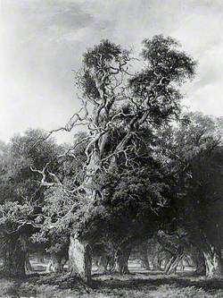 An Old Oak, Forest of Arden, Warwickshire