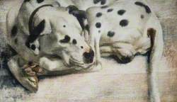 'Grock', a Dalmatian Dog