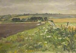 Hedgerow, Lambourn Down