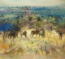 Restless Zebra