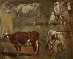 Four Sketches of Cows