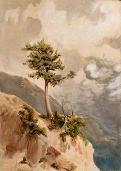 Young Juniper Tree (Juniperus Nigra) on a Ridge Top in Nepal