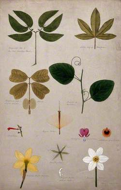 Various Leaf Forms and Flower Parts