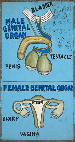 Disease and Organs Treated by a Vodoo Practitioner in Benin: Genital Organs