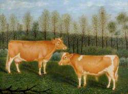 Guernsey Cattle, 'Unity' and 'Souvenir'