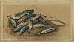Pile of Mackerel