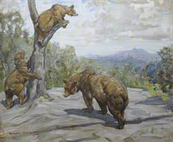 Bears at Edinburgh Zoo