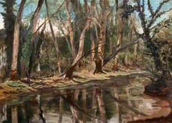 Arundel Park Woods