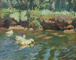 Sunny Bank, Ducks Feeding