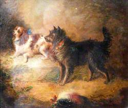 A Spaniel and a Terrier