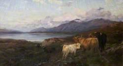 Cattle in a Highland Loch