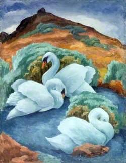Swans at Abbotsbury, Dorset