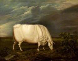 Houghton Ox