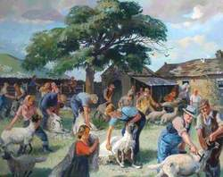 Sheep Shearing in Baldersdale, County Durham