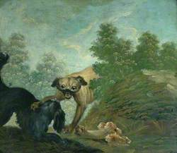 Two Dogs Fighting over a Bone