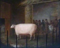 Sheep in a Sale Pen