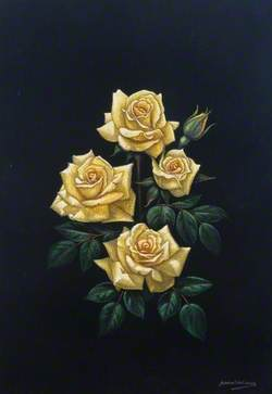 Yellow Roses on Black Velvet
