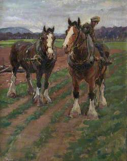 Study of Clydesdale Horses