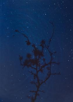 Starfield – Blackthorn