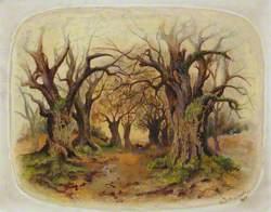 A Winter Woodland Scene