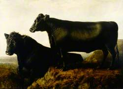 The Galloway Breed
