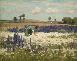 Woman Picking Flowers